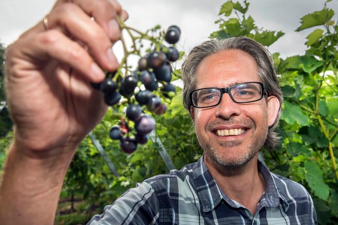 Wijnboer Tycho Vermeulen keurt zijn druiven in de Haagse Stadswijngaard.