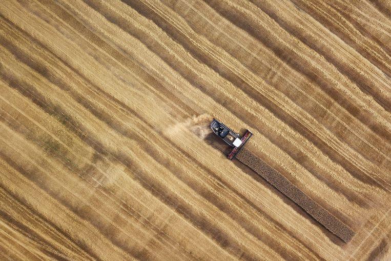 Dit jaar verwacht Valeri Kravtsov 45 duizend ton graan te verbouwen op zijn 6,5 duizend hectare grond. Beeld Arthur Bondar