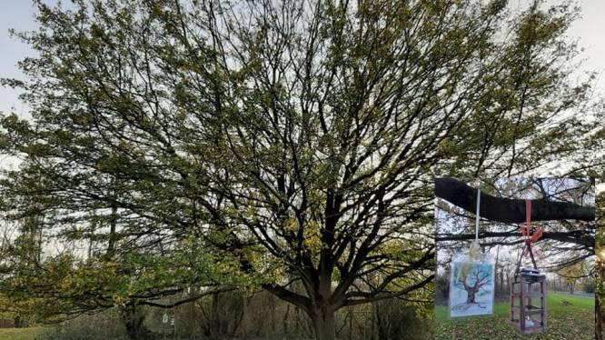 """Dichteres schenkt Zelzate een troostboom: """"Plek voor bezinning"""""""