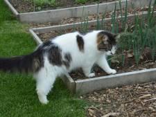 Schijtbeest! Dit kun je doen tegen kattenoverlast