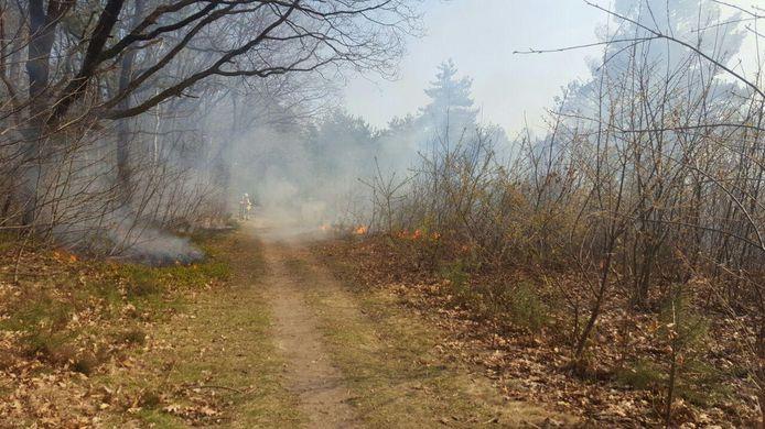Rozendaal - De hulpdiensten zijn vandaag in actie gekomen voor een forse natuurbrand in Rozendaal.