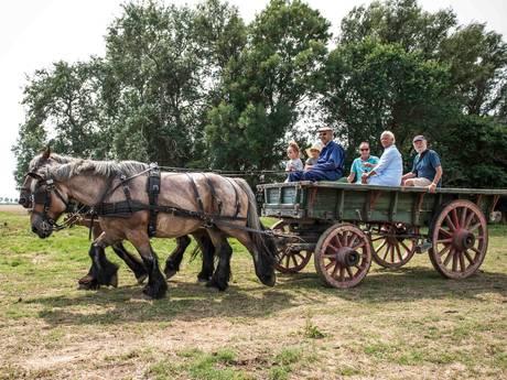 Trekpaardendag Oostburg trekt massa volk