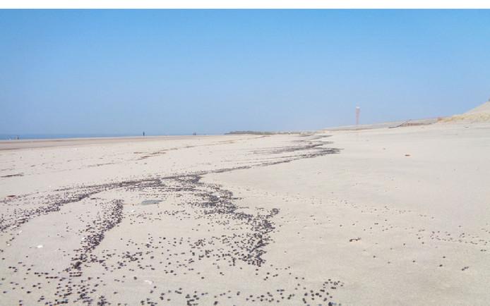 Het strand van de Maasvlakte is bezaaid met zwarte plastic korrels.