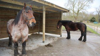 Documentaire en boek brengen hulde aan het Brabants trekpaard