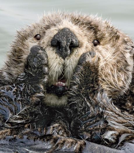 Van brutale leeuwenwelp tot verbaasde otter: lachen om gekke foto's van dieren in Tilburg