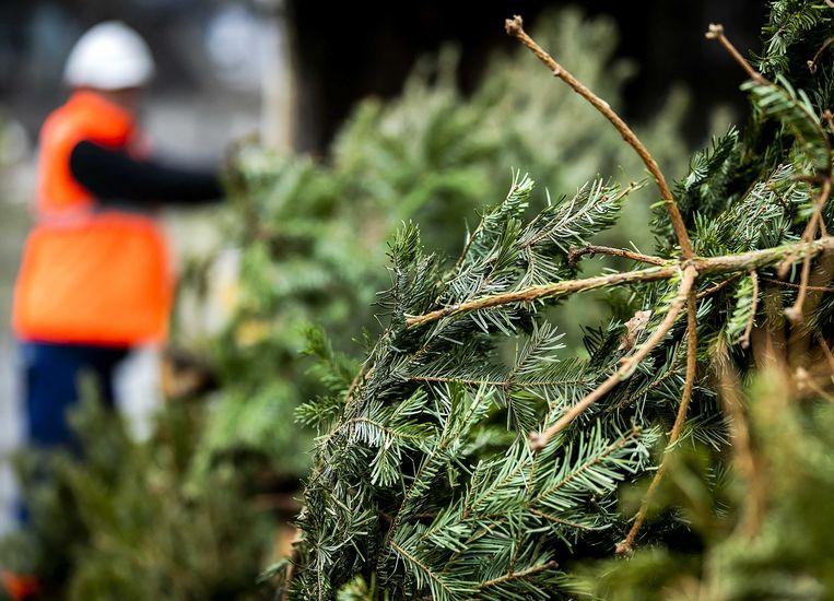 Gratis ophaling kerstbomen in Keerbergen op maandag 20 januari.