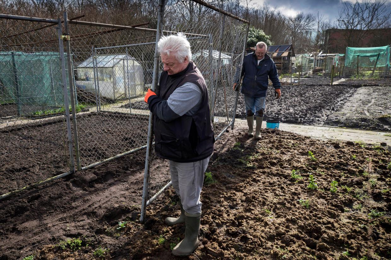 Jan Bouhuijs plaatst een hek om zijn gewassen straks te beschermen tegen muizen en konijnen.