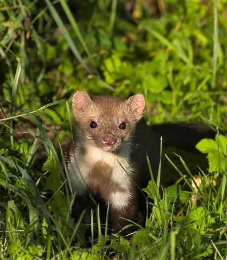 Dieren kunnen veilig oversteken via nieuwe faunatunnel bij Biltse Rading