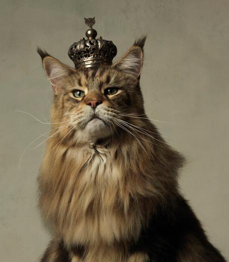 Kunsthal wordt tijdelijk kattenparadijs