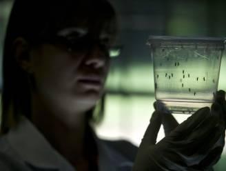 """""""Zwangere vrouwen moeten Latijns-Amerika mijden vanwege gevaarlijk virus"""""""