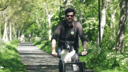 Groen pleit voor hondenparken
