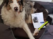 Honden in Hardenberg mogen helpen om de straten weer veilig te  maken