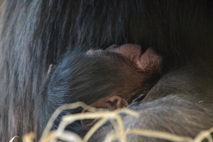 Het pasgeboren jong van Christa