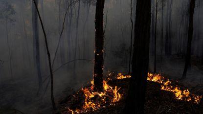 """""""Te laat om te vertrekken"""": noodwaarschuwing voor bosbrand in de buurt van hoofdstad Canberra"""