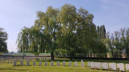 """Minister Diependaele kent 354.000 euro toe voor de restauratie van oorlogsbegraafplaatsen: """"Dit funerair erfgoed moeten we onderhouden, het vormt de basis van vredeseducatie"""""""