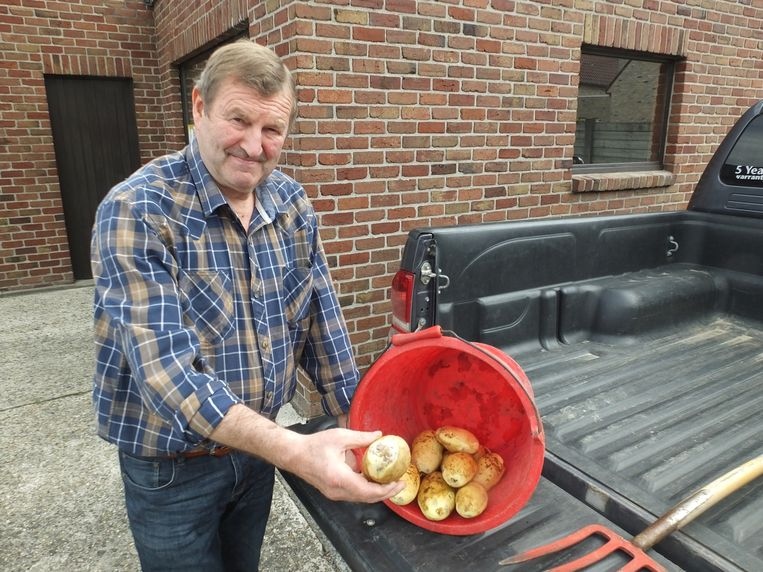 Jozef Vercamer toont enkele aardappelen, die veel 'blauwe plekken' vertonen.