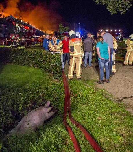 Varkenshouders willen onderzoek naar stalbranden
