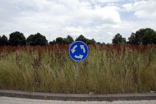 Gras en onkruid op een rotonde.