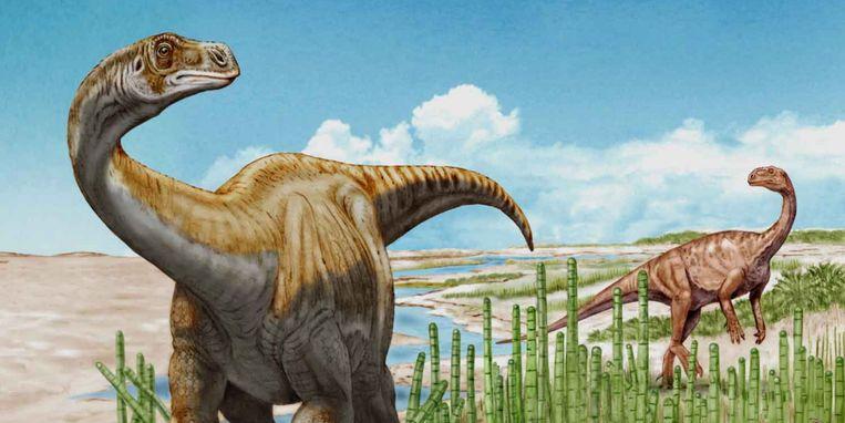 Reconstructie van de Schleitheimia schutzi (met een Plateosaurus op de achtergrond). Beeld Universiteit Utrecht / Beat Scheffold © Naturforschende Gesellschaft Schaffhausen