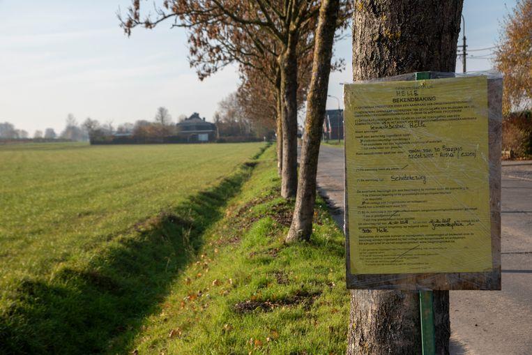 De gemeente Melle wil de bomen rooien met een kapvergunning. Er loopt een onderzoek.