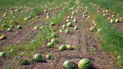 Bio Moestuiniers leren groenten kweken