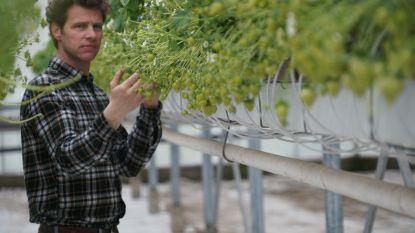 Tekort aan seizoensarbeiders in tuinbouw dreigt: ook voor aardbeiteler Steve is het bang afwachten