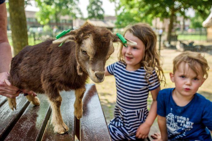 Ook Kinderboerderij t Erf in Waalwijk heeft last van de corona-crisis. Bezoekers zijn welkom, maar georganiseerde activiteiten zijn er deze maanden niet.
