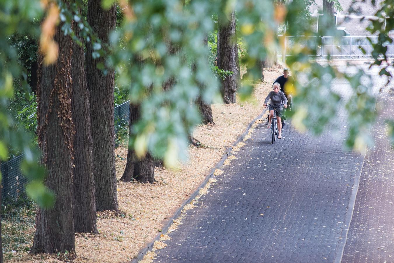 droogte/ herfst in de zomer. Arnhem