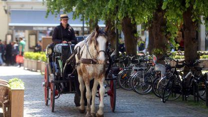 """Ritje met paardenkoets wordt wéér duurder: """"Stro en voer kosten ook meer"""""""