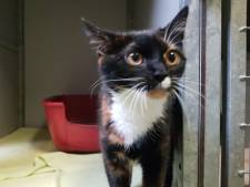 Bizar! Deze kat werd achtergelaten in een dichtgeplakte kattenbak voor het asiel
