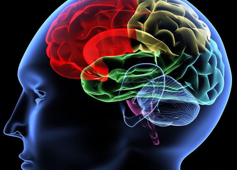 Koolhydraten hebben wellicht de belangrijkste rol hebben gespeeld in de ontwikkeling van de mens: ze hebben ervoor gezorgd dat we een groot en intelligent brein kregen.