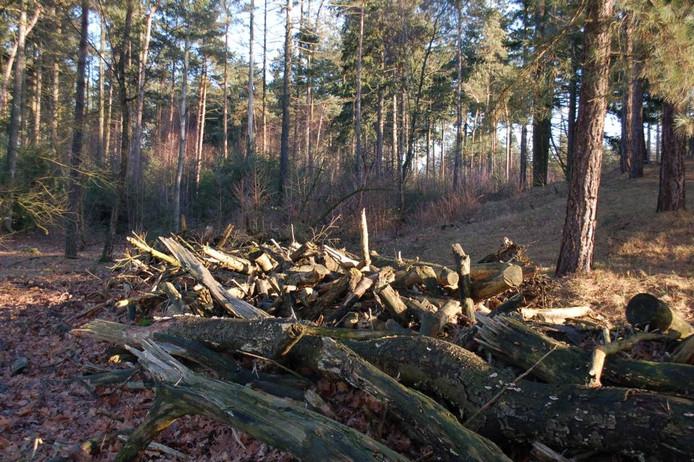 Dode stammen bij het Ganzenven, waar het verzet tegen de bosvernieuwing van Herperduin begon.