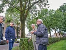 Greet vecht voor 'essentiële' Osse essen:'Tien bomen behandelen, ik betaal het zelf'