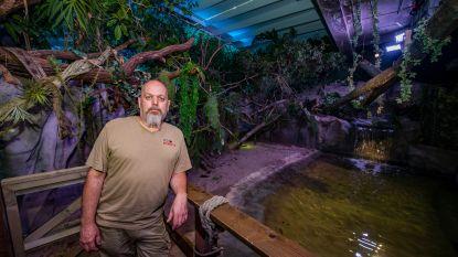 """Zooverzorger Erik is al 26 jaar gepassioneerd door reptielen en amfibieën: """"Al drie keer gebeten door een slang, maar het was telkens m'n eigen fout"""""""