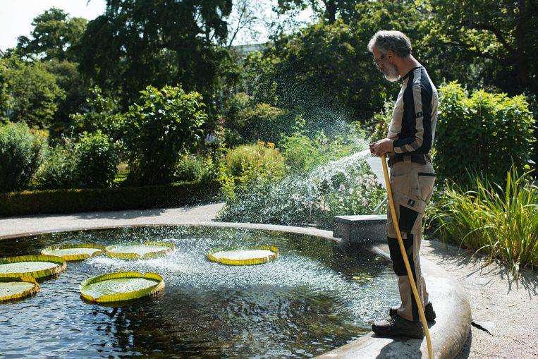 Tuinman Jos van der Hoek: 'In de Amazone regent het ook.' Beeld Teska Overbeeke