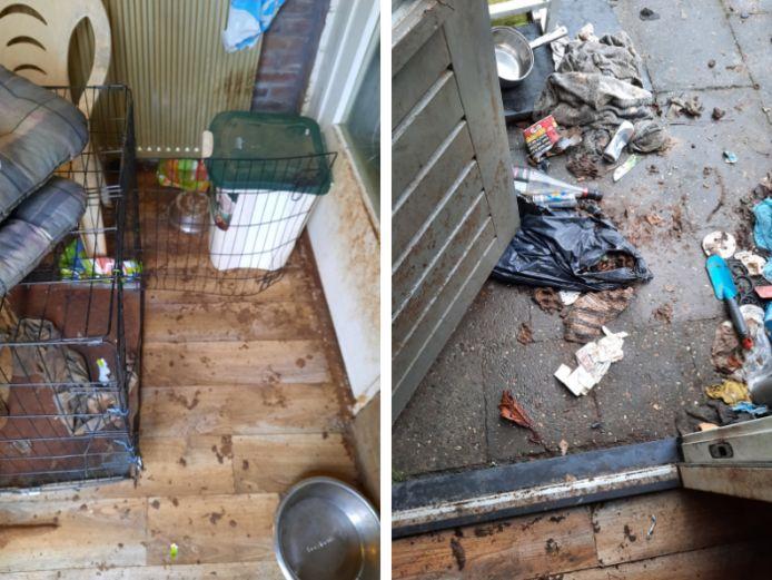 Op hun website deelt de Dierenbescherming foto's van de omstandigheden waaronder de honden in Dronten leefden.