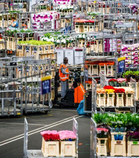 Royal FloraHolland grijpt in: kwekers mogen nog maar dertig procent van hun bloemen en planten aanleveren
