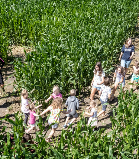 Na groeispurt kan het maisdoolhof in Leimuiden open