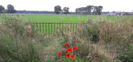 Beekweg Heijen 'ideale plek' voor aanleg zonnepark van 10 hectare