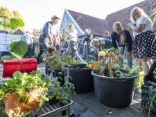 Plantenruil in Almelo: Helaas ... Geen lampionplant, dan maar een kerstster