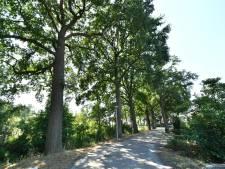 Trekproeven asbestbomen in Goor uitgesteld vanwege stormachtig weer