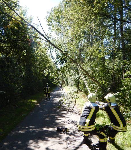 Brandweer zaagt boom om, na bijna-ongeluk met fietser bij Ammeloe