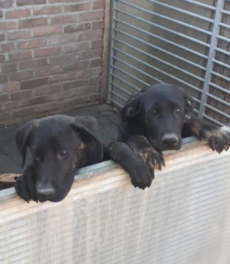 Zes honden in beslag genomen in Twenterand: 'Pup was ziek en uitgedroogd'
