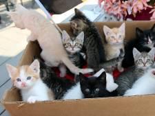 À Seraing, une prime de 50 à 75€ pour stériliser les chats domestiques