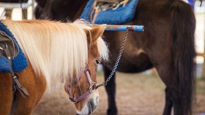 Geen verbod op kermiskramen met pony's