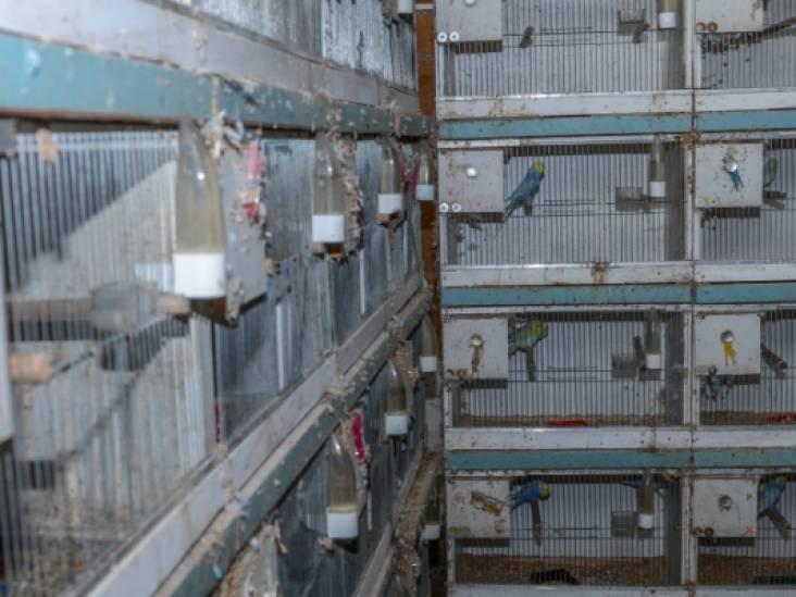 Dierenbescherming: 'Brabantse handelaar houdt duizenden vogels in verschrikkelijke omstandigheden'