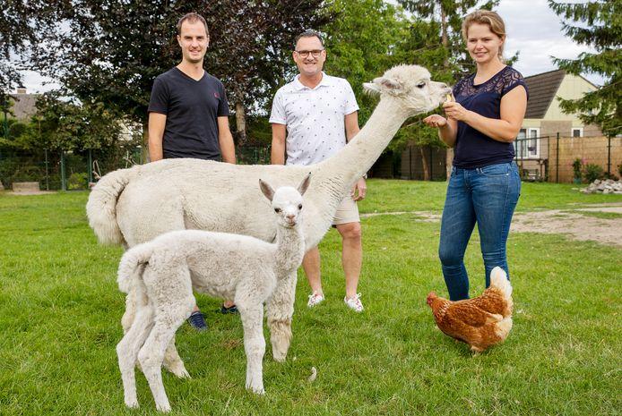 In De Dierenweide in Acht is alpaca Teddy geboren. Marco Tobben (midden) legde de bevalling vast op film. Links Jeroen Stabel en Inge Slaats.