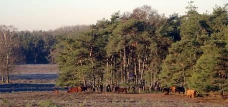 Hoog Over Wezep komt met brochure: 'Lelystad Airport bedreigt Noord-Veluwe, dus ga er wandelen of fietsen nu het nog kan'