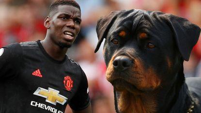 """Pogba betaalt flinke som voor hond die hem moet beschermen: """"Voetballers worden geviseerd"""""""
