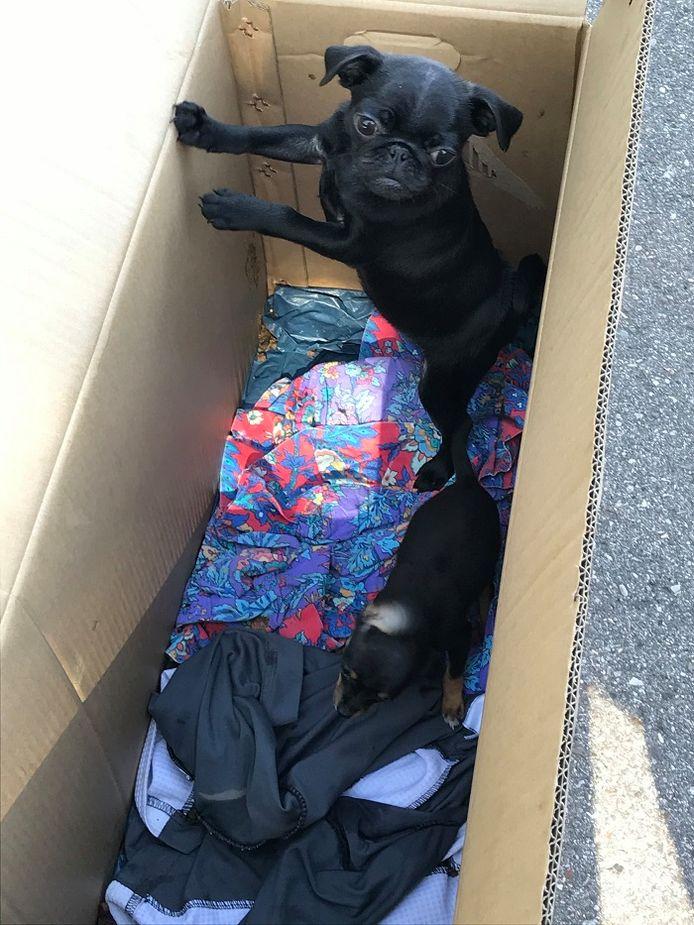 Een van de hongerige en dorstige puppy's die in beslag werden genomen.